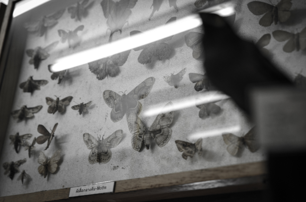 Moth and bird.